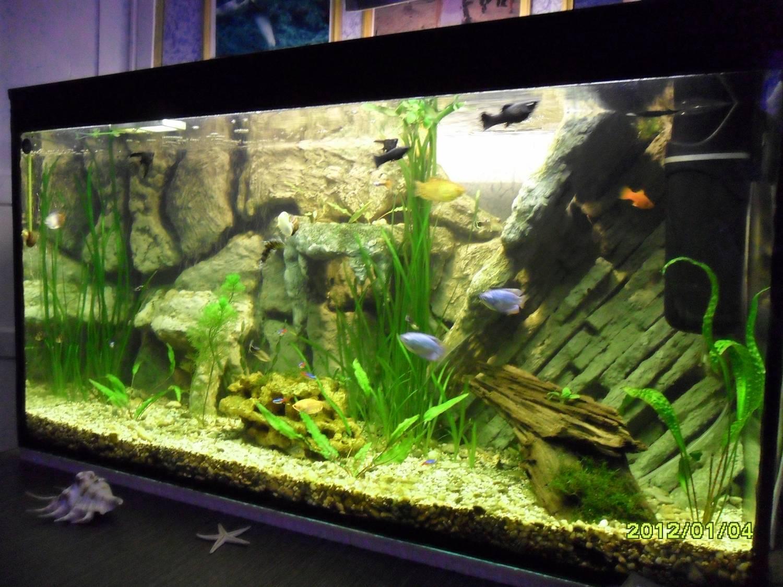 Как сделать фото аквариума