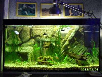 Как сделать 3д фон в аквариуме